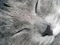 """""""sleeping kitten"""""""